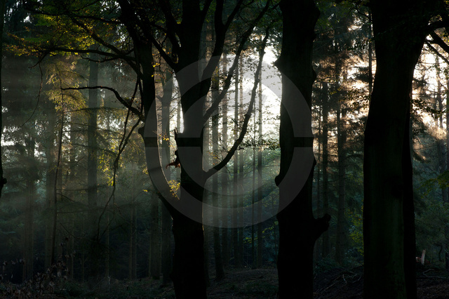 Landschaften_Copyright_420.jpg