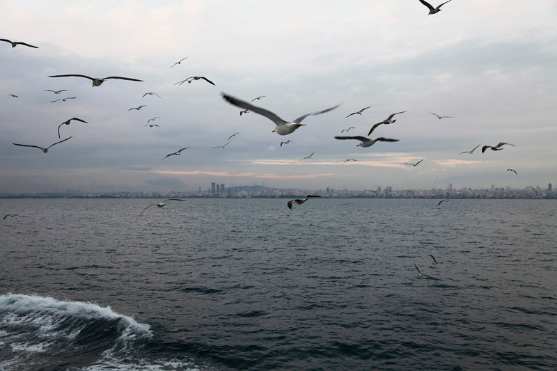 freedom_2011.jpg