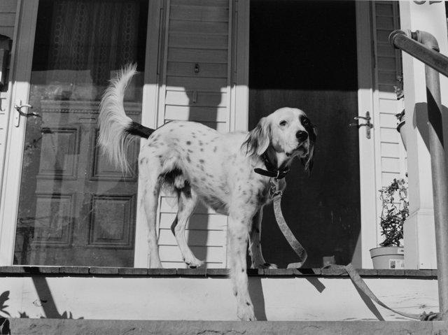 Dog Somerville porch.jpg