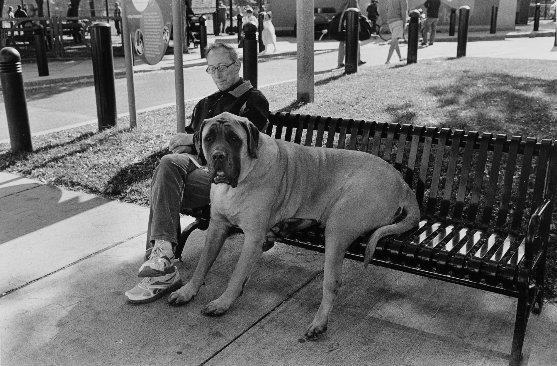 Dog on bench.jpg