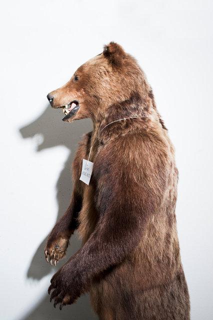 36_Bear.jpg
