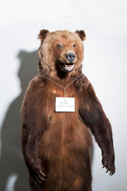 35_Bear.jpg