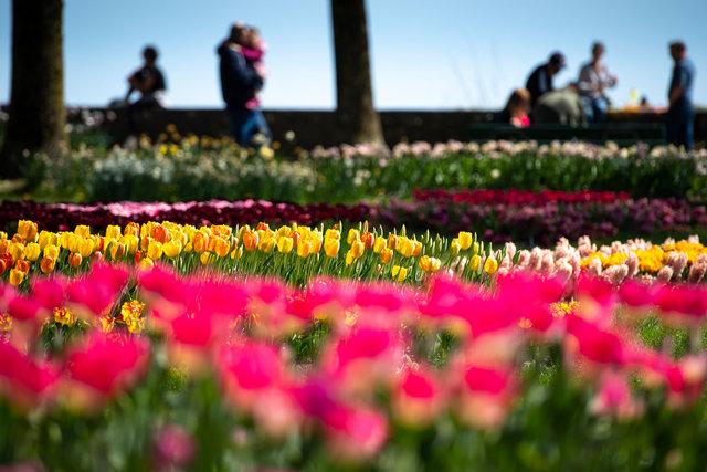 Morges - Fête de la Tulipe - 2020