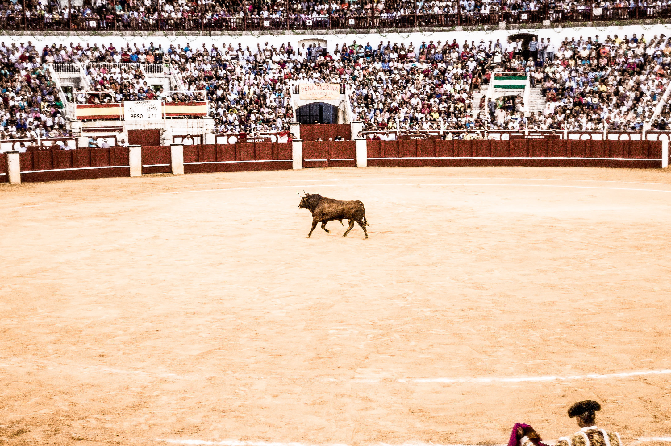 The Bullfight-187-bewerkt.jpg