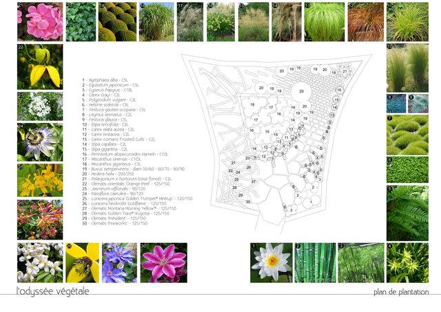 planche concours / plan de plantation