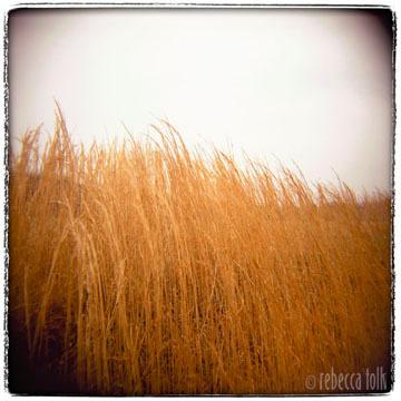 02-10-02-06 Grass Hill.jpg