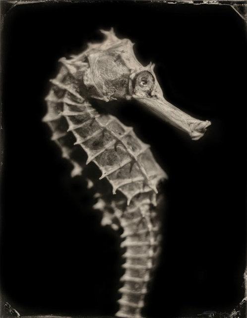 Hippocampus #5