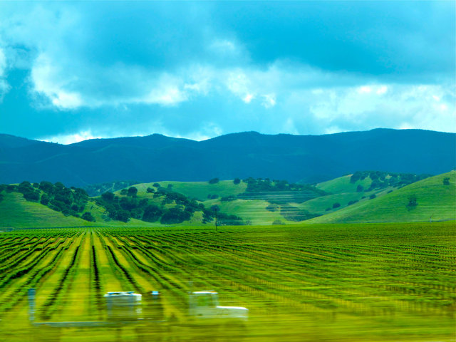 © CORDAY - Vineyard In Motion