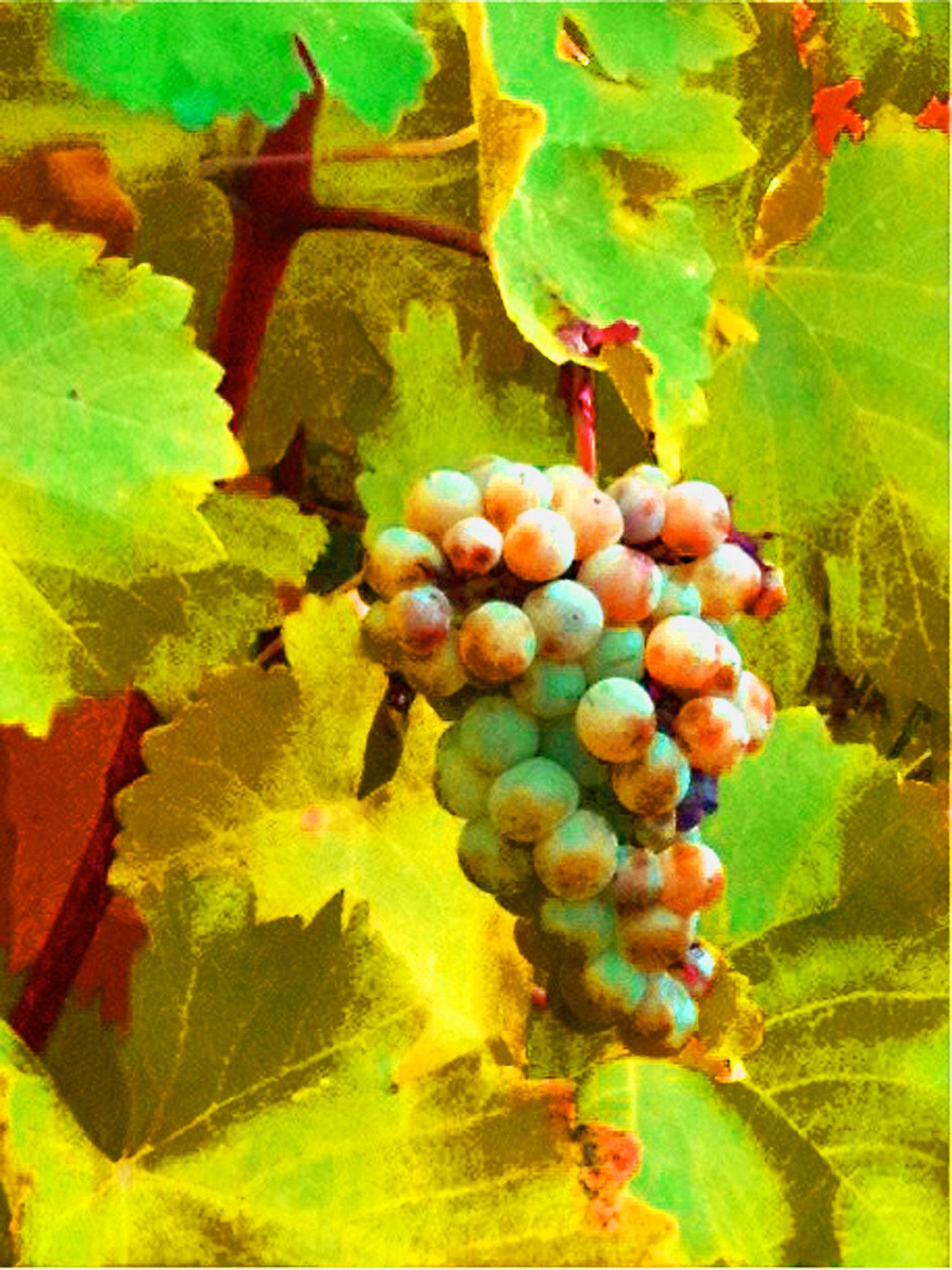 © CORDAY - Paschke Grapes