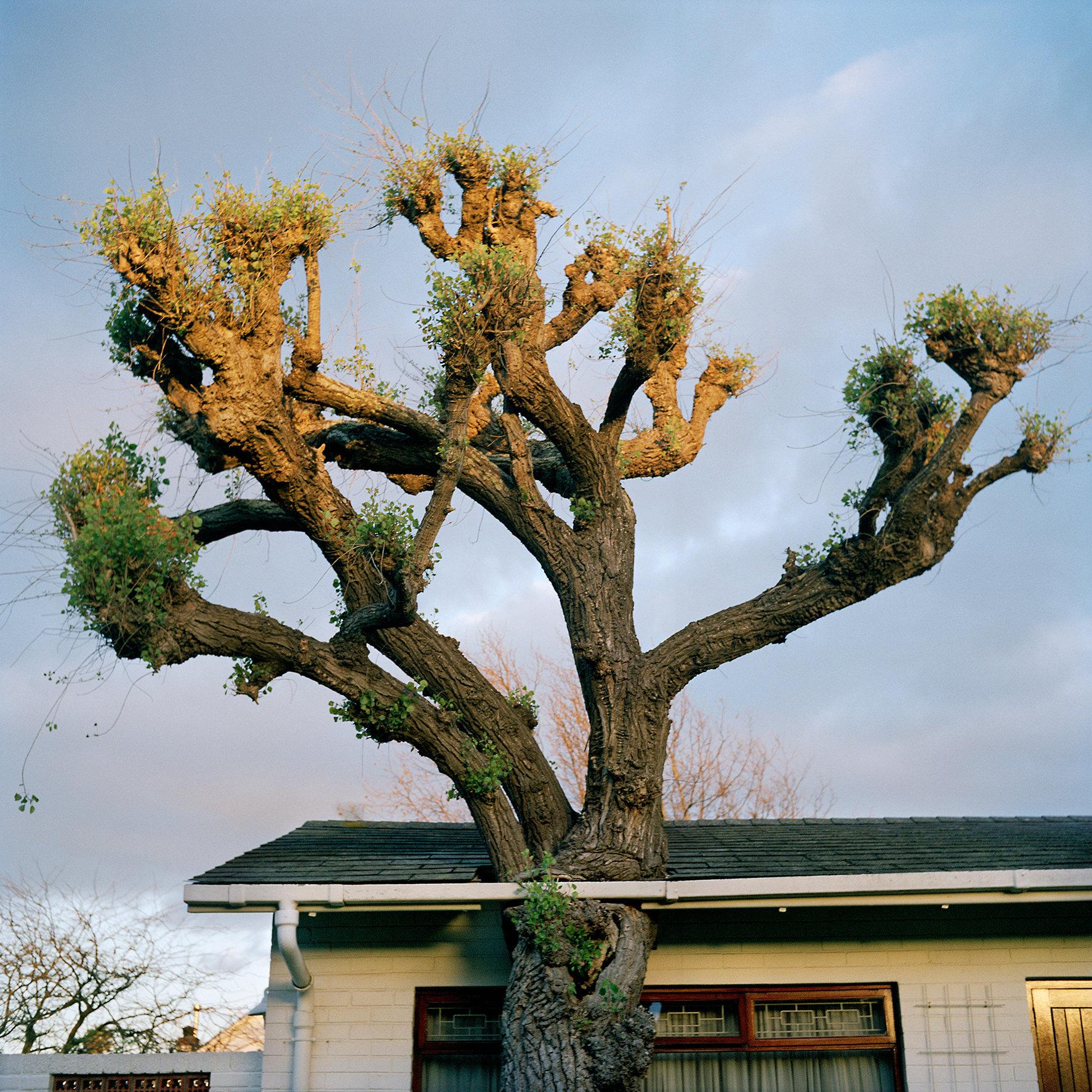 Stunted tree 03 2017_05_07 copy.jpg