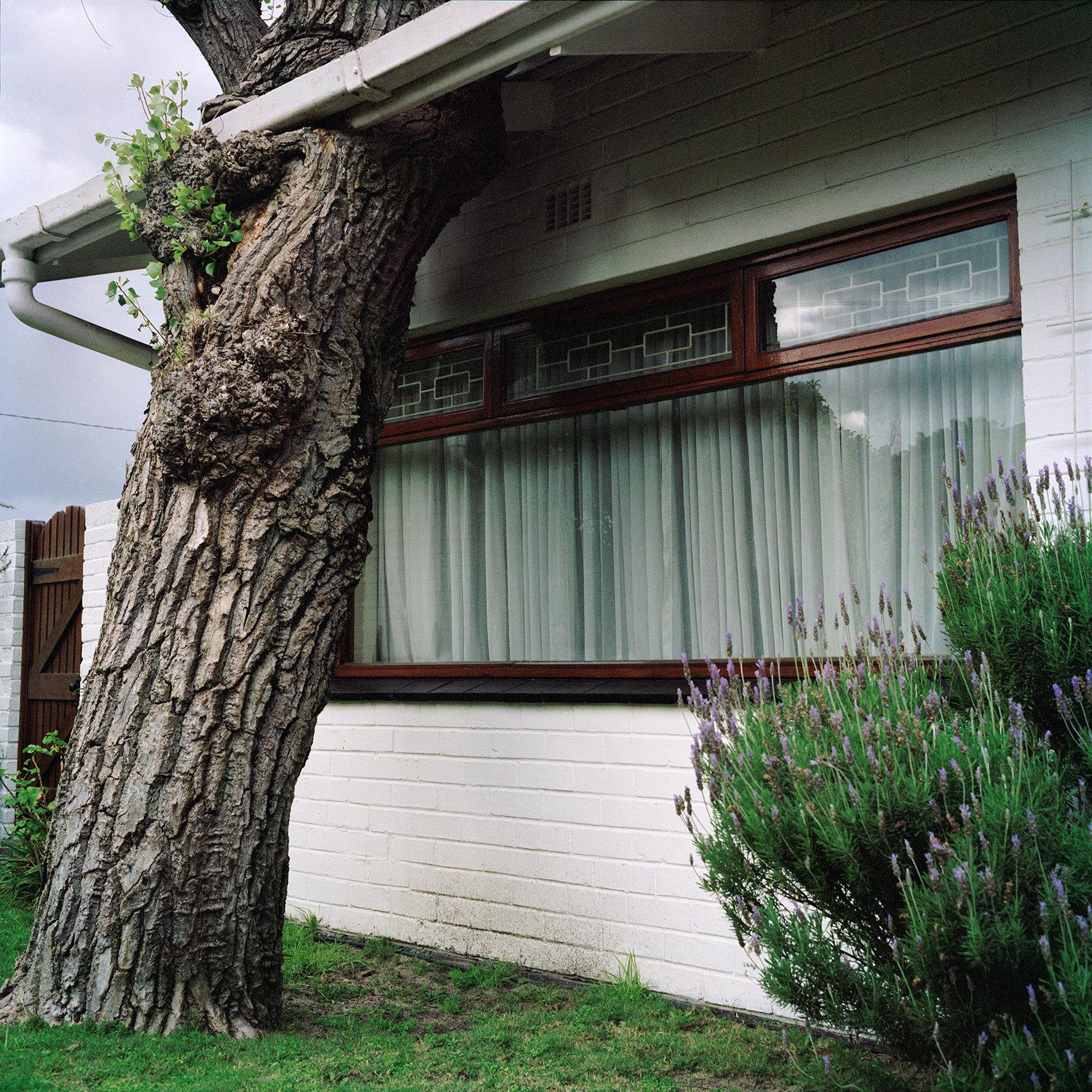 Tree through the roof 2017_05_07 copy.jpg