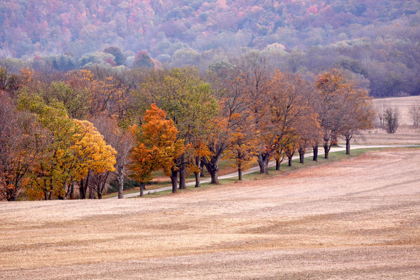 Fall Harvest, Ohio
