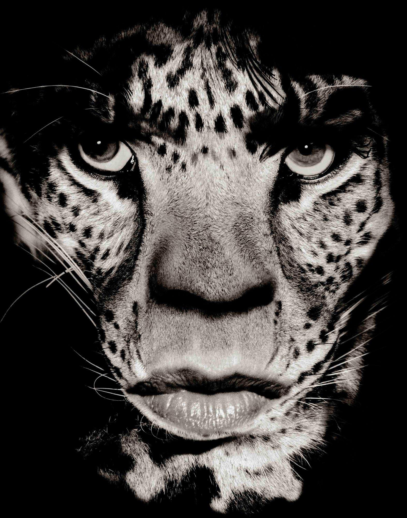 Mick Jagger © Albert Watson