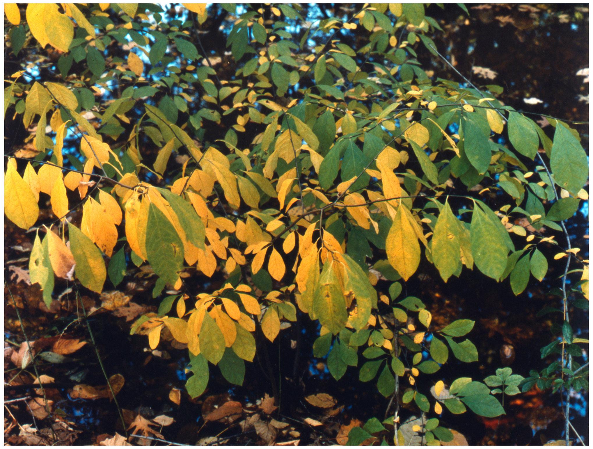 Landscapes Color leaves.jpg