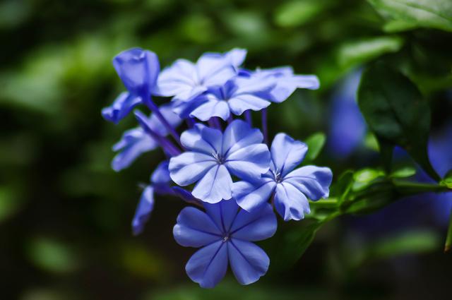 blueflwr2lr.jpg