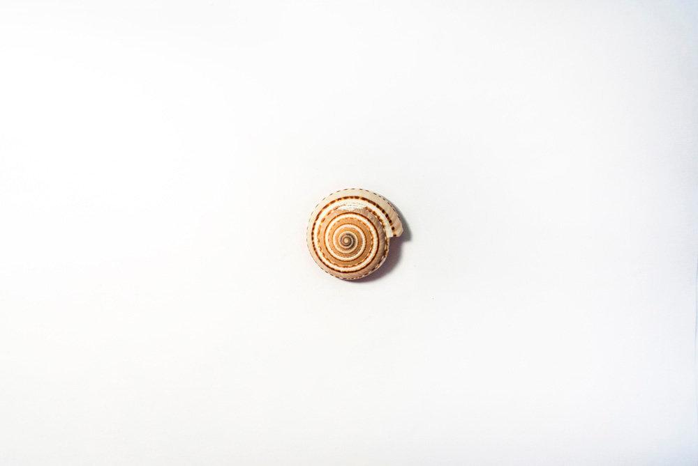 蜗牛 (Wo Niu)