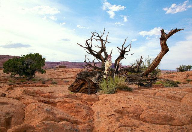 Sandstone and Juniper