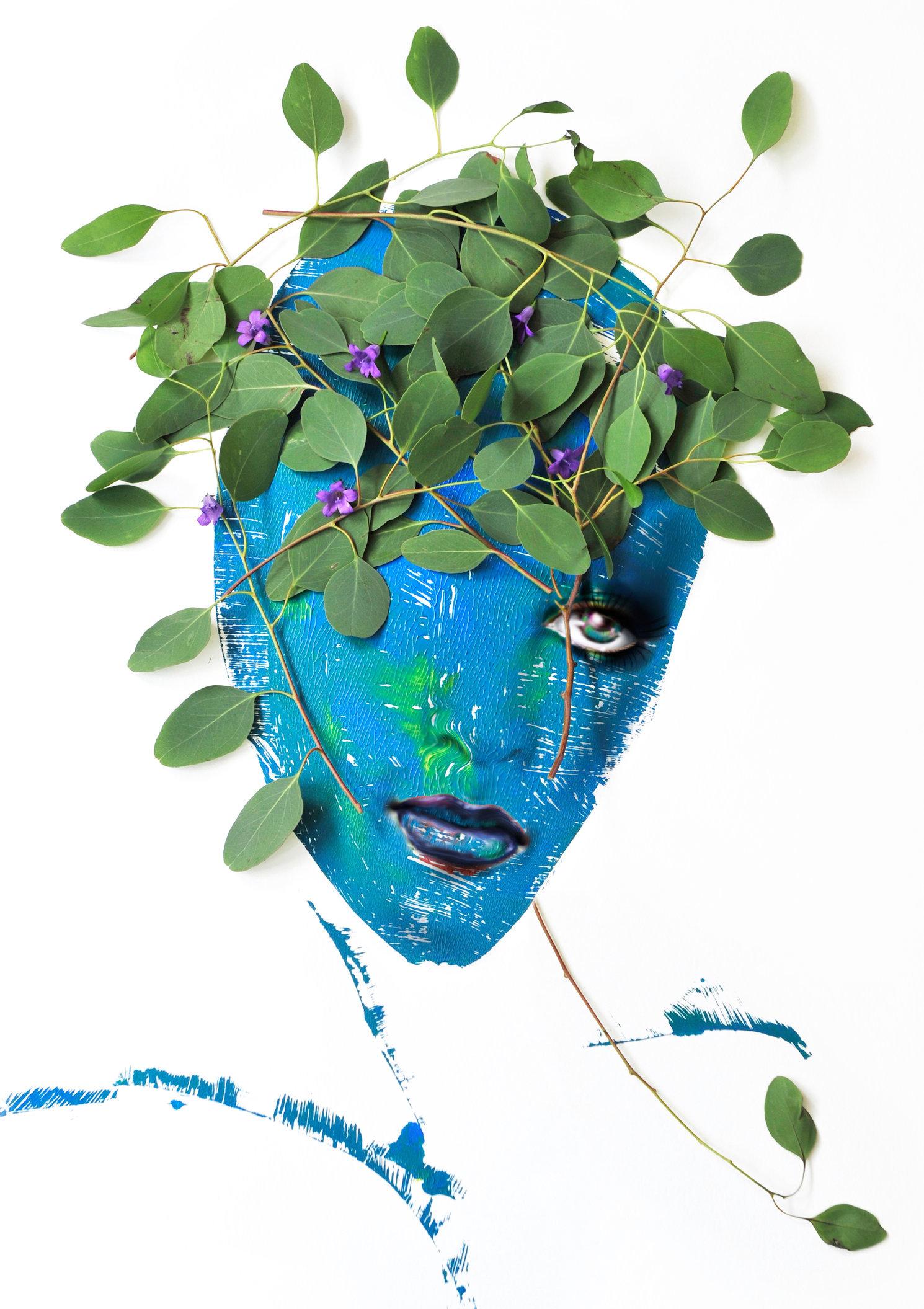 eucalipta mo.jpg