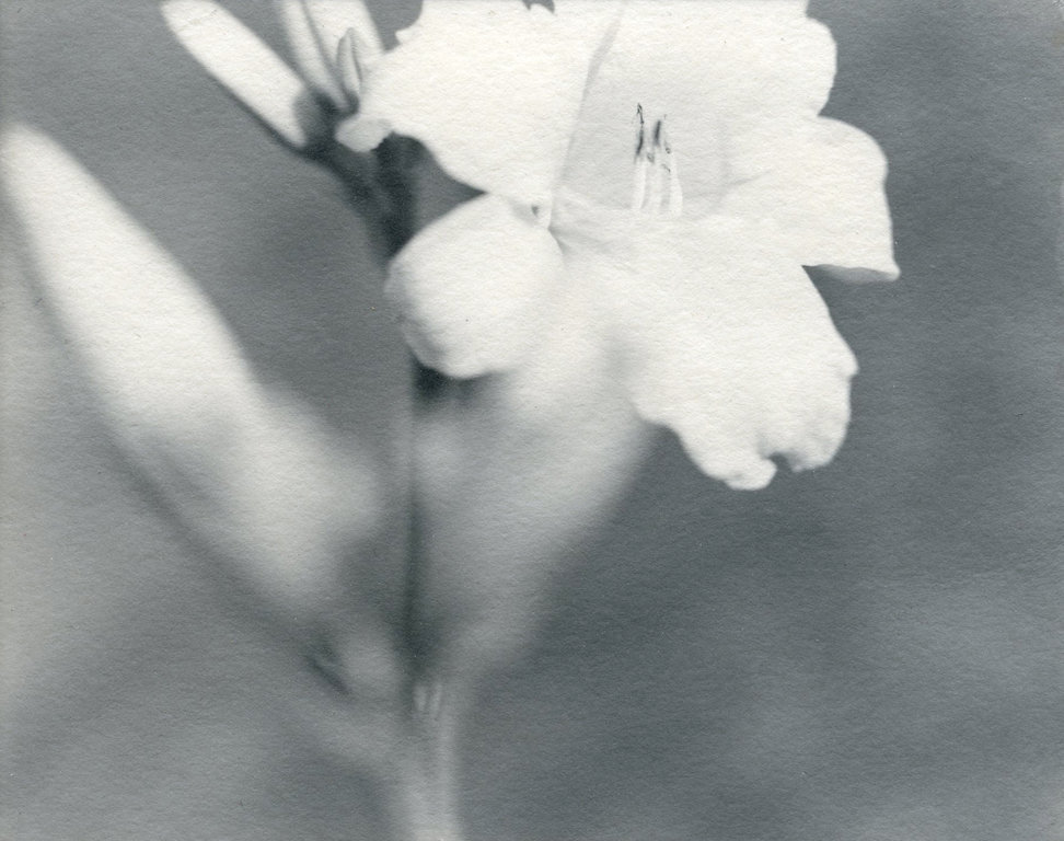 Lily 3, Chicago, 1997