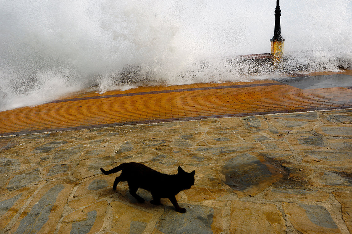 The Cat and the Wave