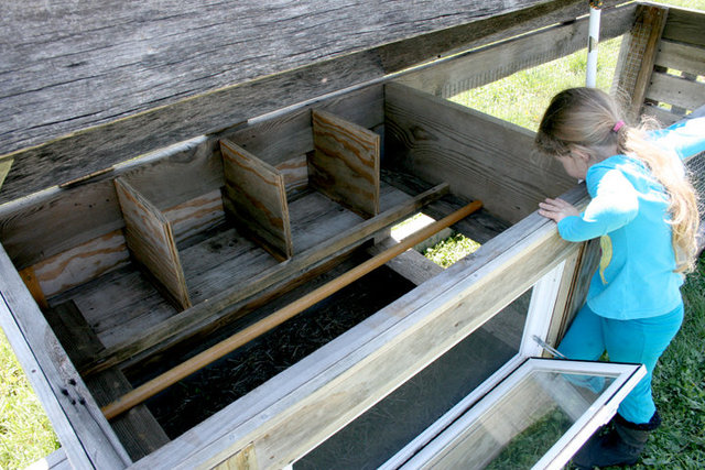 nesting boxes and roost