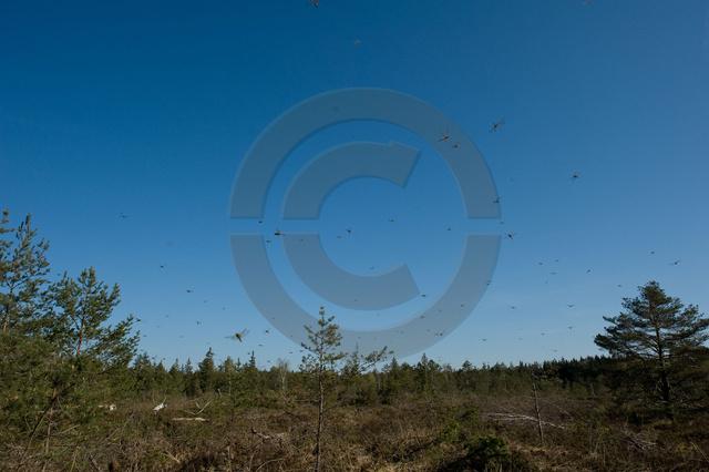 Insekten_Copyright_321.jpg