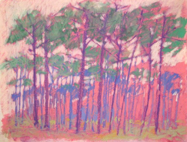 Pines in Gulf Breeze 2