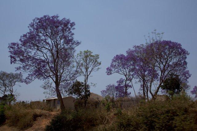 Malawi_019.jpg