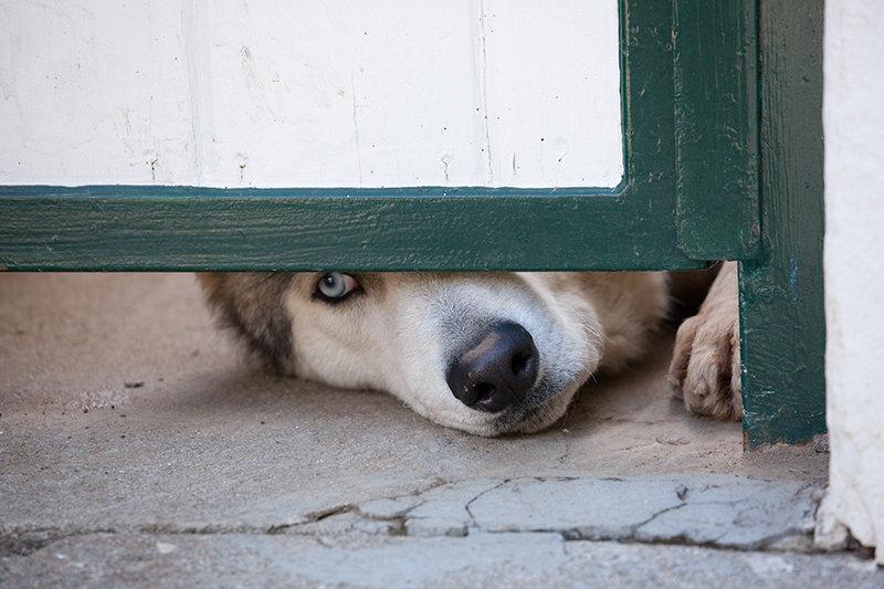 Neighbor Dog
