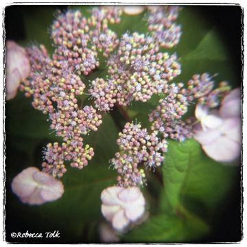 09-07-12-10 Lace Cap.jpg