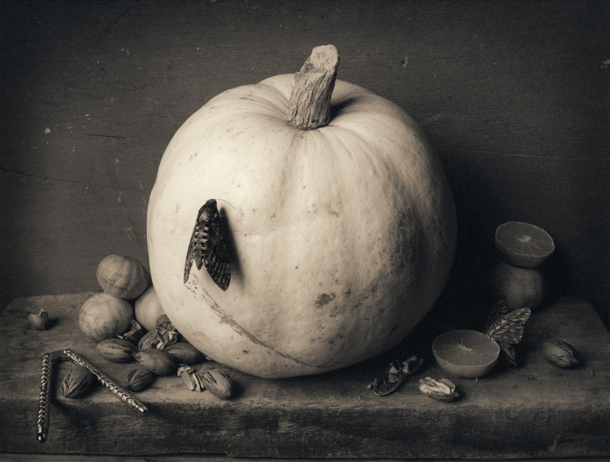 Pumpkin and Moth, c 2003