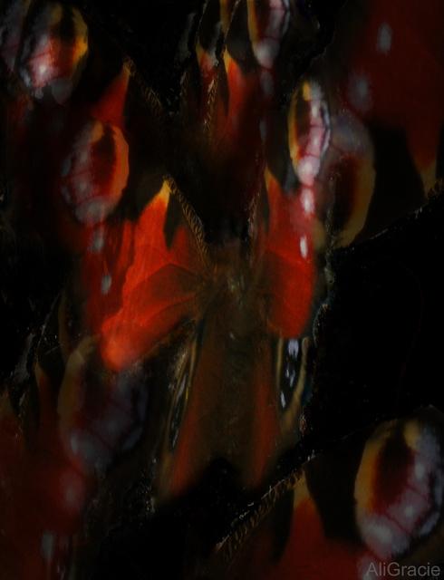 Butterflies in the Dark by Ali Gracie