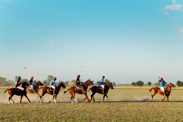 Polo in Argentina II