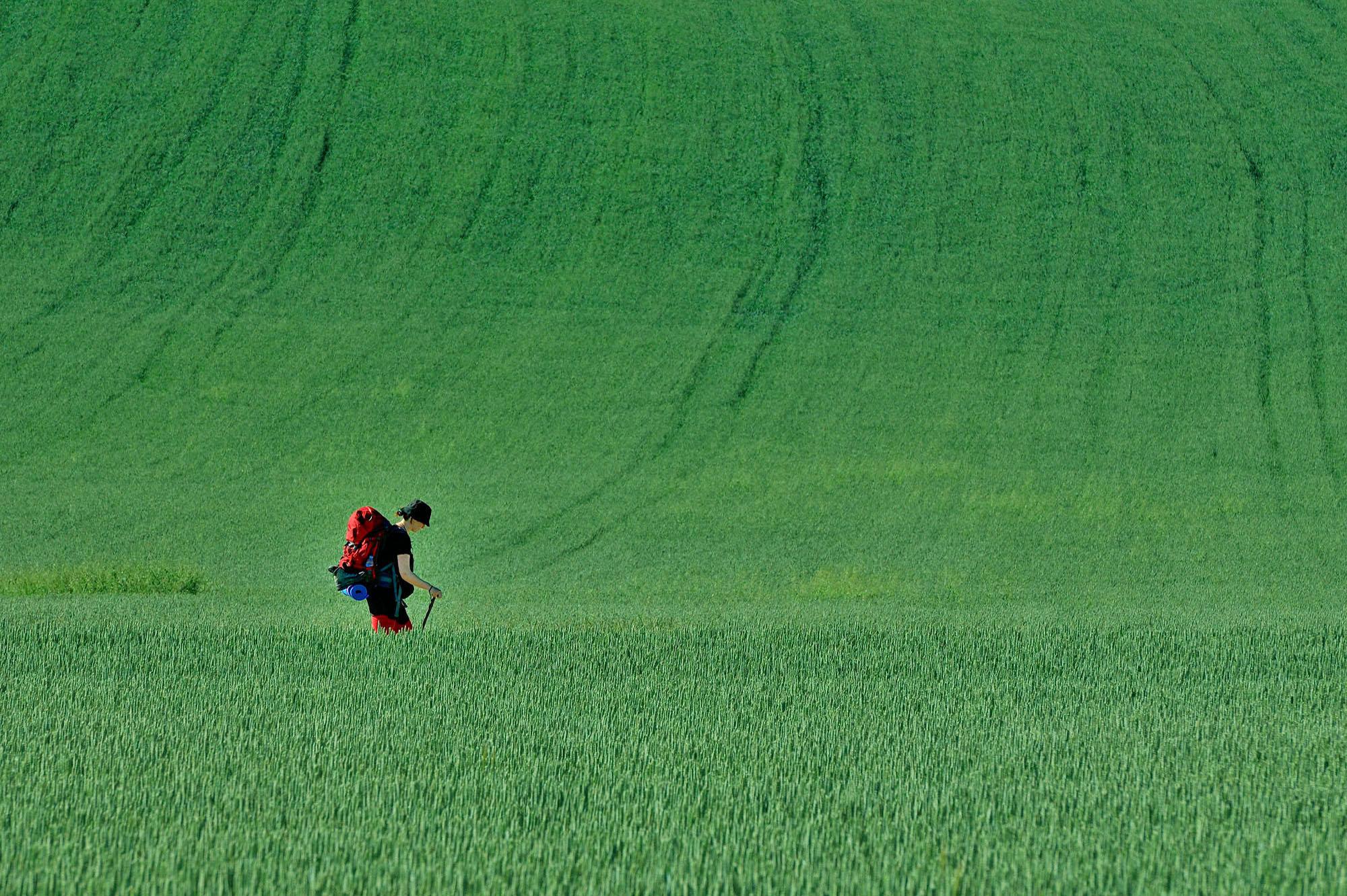 A travers les champs de blés au printemps, Rioja