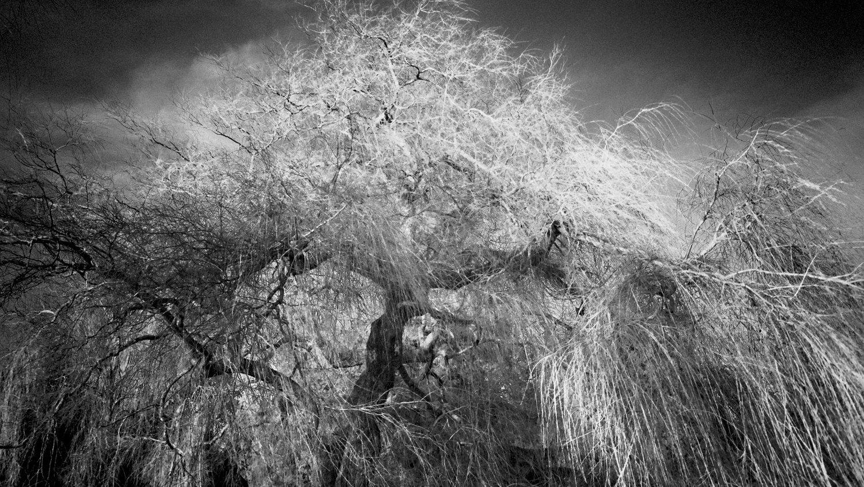 Tree-bw68B.jpg