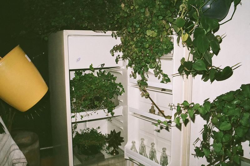 bouteilles vides et plantes dans le frigo, mexico.jpg