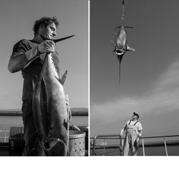 pêcheur thons 3.jpg