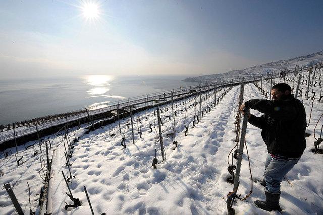 Vignes sous la neige - Lavaux - 2009