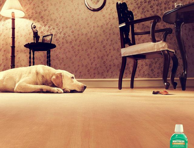 Sai Dog.jpg