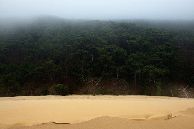Forêt des Landes 1