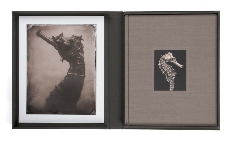 Limited Edition with Collector's Box & Print, Hippocampus #2