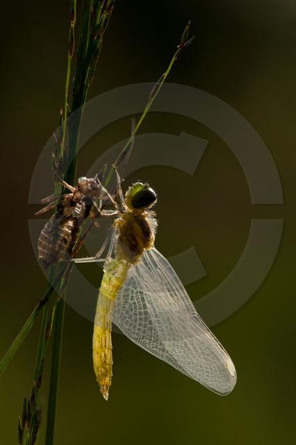 Insekten_Copyright_385.jpg