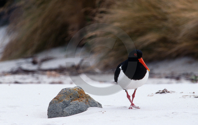 Tiere-Vögel-27.jpg