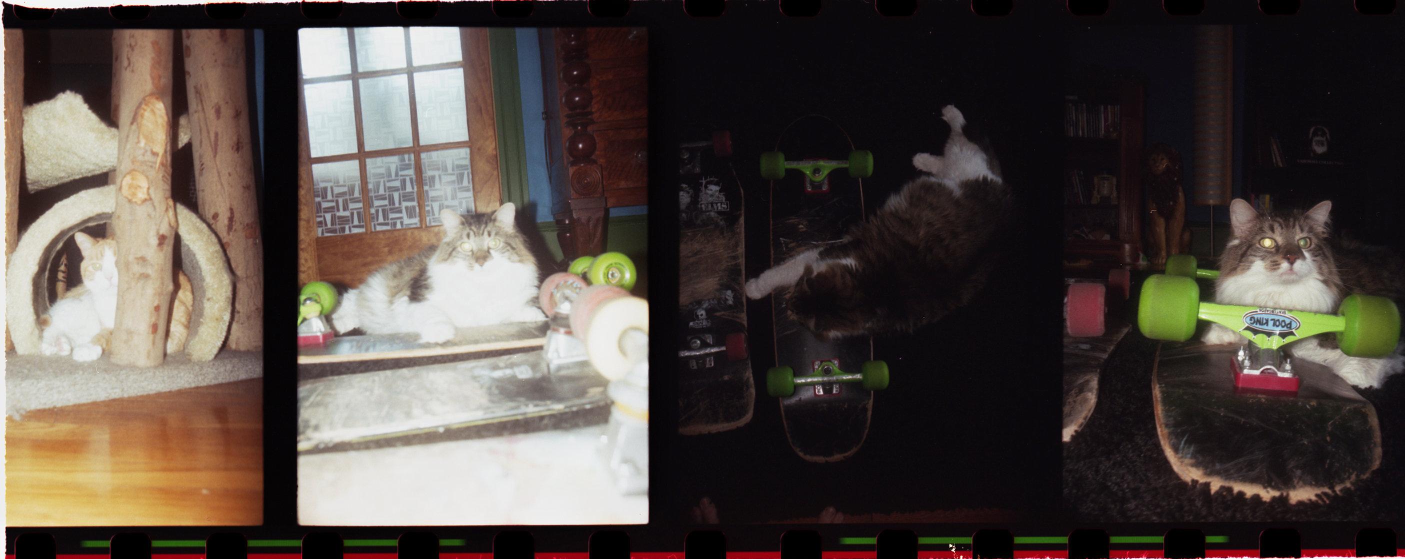 07catsFLATSHARP.jpg