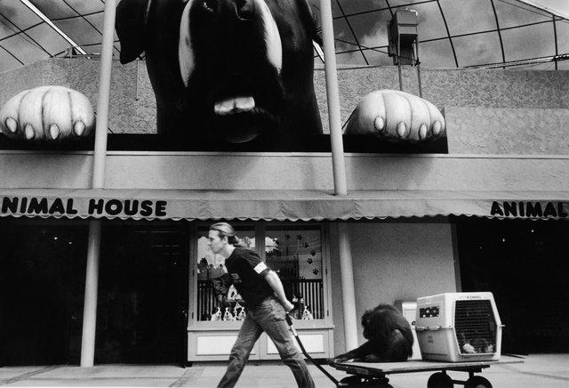 Universal Studios monkey.jpg