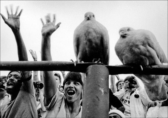 Oscars birds.jpg