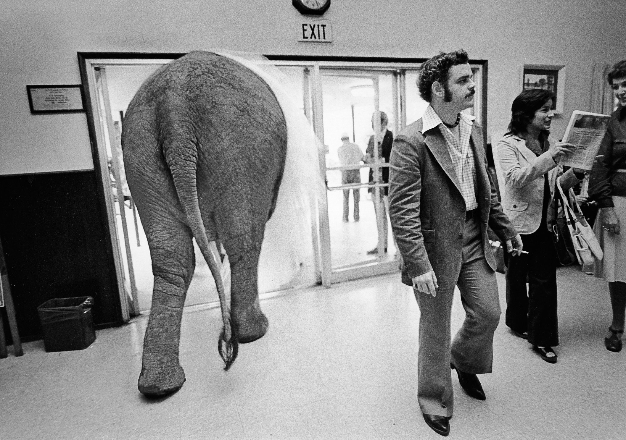 Elephant in foyer.jpg