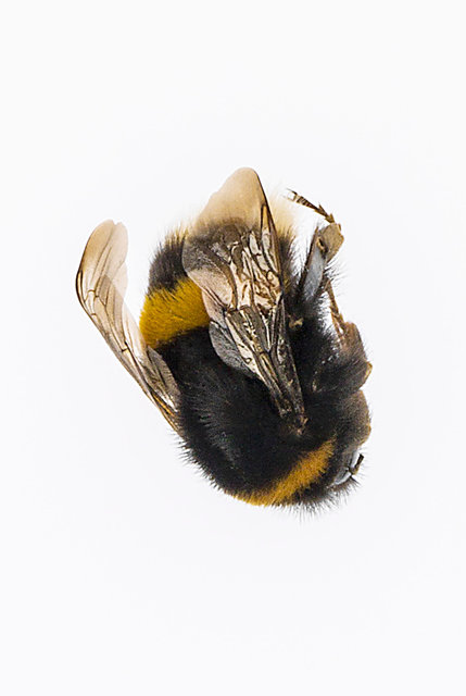 bee business 2 website.jpg
