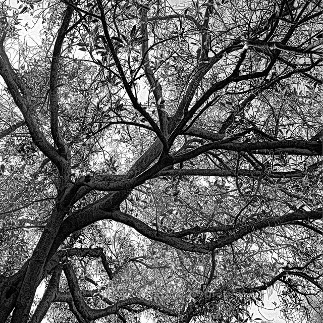 Tree_Upper_right_6x6.jpg