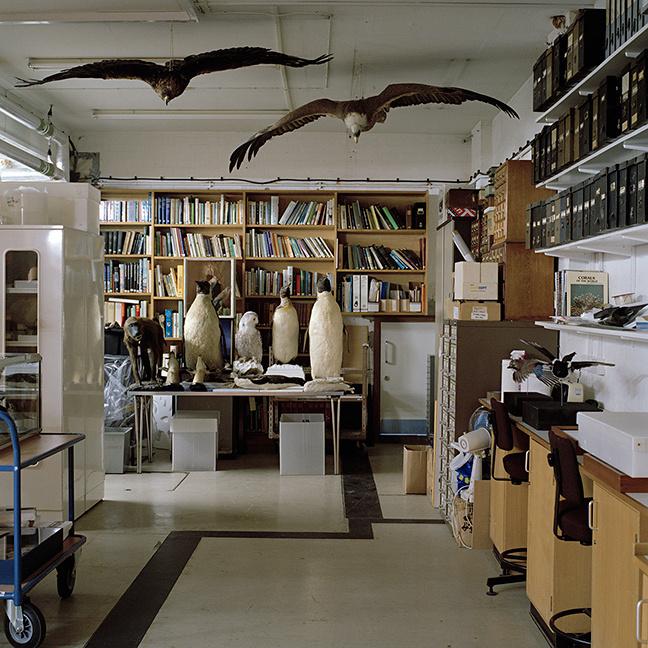 MuseumBirds1smallweb.jpg